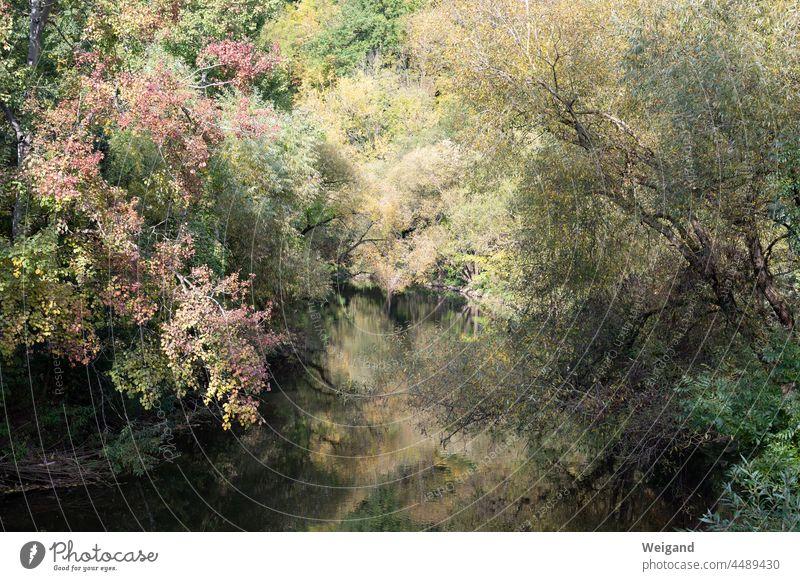 Fluss in Herbstfarben Laub Hohenlohe Kocher Schwäbisch Hall bunt Vergänglichkeit vergänglich Hoffnung trauer