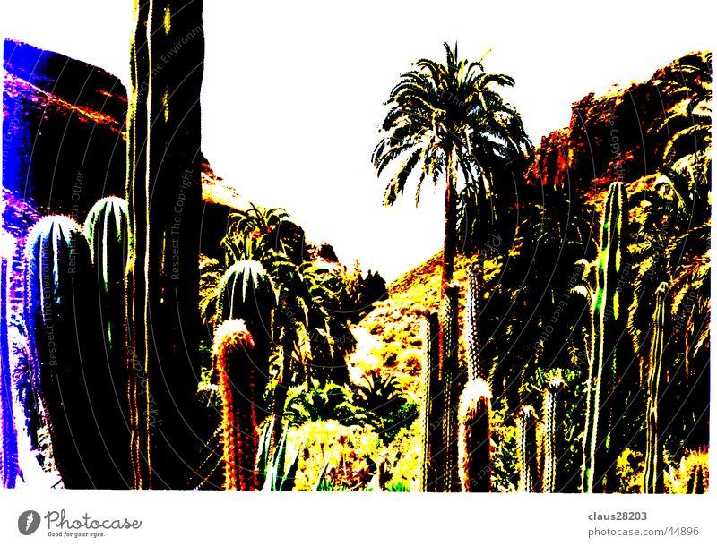 Gran Canaria Kaktus Kanaren Licht Berge u. Gebirge Sonne Farbe