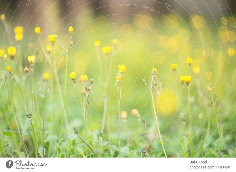 Teepflanzen mit Sonnenstrahlen abstrakt Hintergrund schön Unschärfe verschwommen Bokeh Gänseblümchen Tag Umwelt Feld Blume frisch Garten Gras grün Landschaft