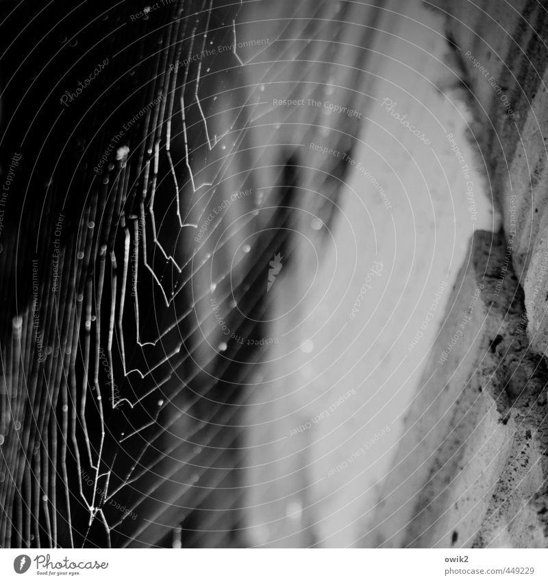 Spinnstube Bauwerk Architektur Spinnennetz Spinngewebe dünn authentisch fest beweglich dehnbar Stein Schwarzweißfoto Außenaufnahme Nahaufnahme Detailaufnahme