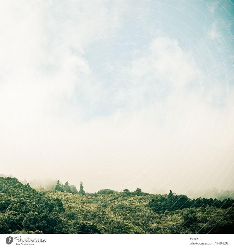 landschaft Umwelt Natur Landschaft Pflanze Feld Wald Hügel grün Nebel Nebelschleier Dunst geheimnisvoll Farbfoto Außenaufnahme Menschenleer Textfreiraum links