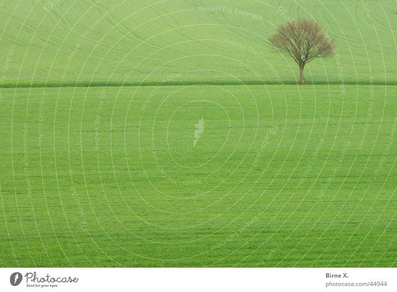 Einsamer Baum einzeln Winter Frühling Feld Wiese Fußweg grün Landwirtschaft Kornfeld Grasland Strukturen & Formen Einsamkeit Niederrhein Xanten Niveau Zweig Ast