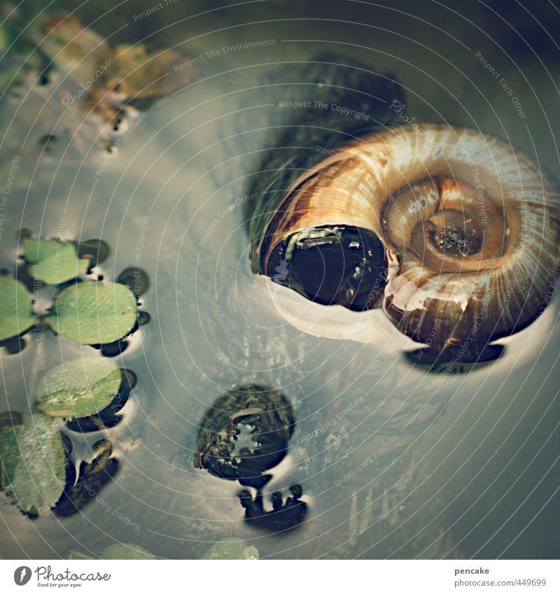 treibgut Natur Wasser Sommer Pflanze Erholung Tier feminin glänzend Dekoration & Verzierung weich Zeichen Im Wasser treiben Flüssigkeit unten Schweben Teich