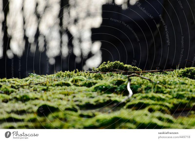 Moos Umwelt Natur Landschaft Pflanze Erde Herbst Winter Klima Schönes Wetter Garten Park Stein dunkel frisch kalt nass grau grün schwarz weiß Friedhof Paris
