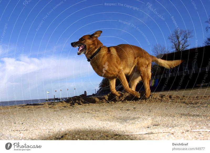 Crazy Dog Hund Strand böse rennen laufen Wildtier Flasche
