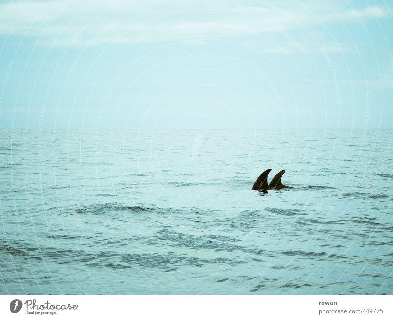 zu zweit Wellen Meer Tier Tierpaar nass blau Paar paarweise Delphine 2 Schwimmen & Baden Haifisch Fisch Horizont Romantik Flosse Yachting bedrohlich gefährlich
