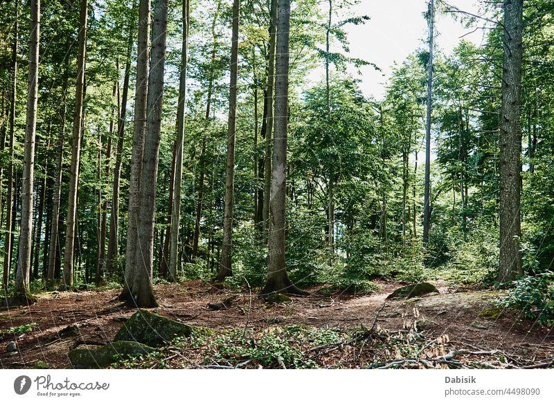 Waldbäume an einem Sommertag. Natur Hintergrund Baum grün im Freien Park sich[Akk] entspannen Berge u. Gebirge Weg Szene Ansicht Wildnis Landschaft Holz Saison
