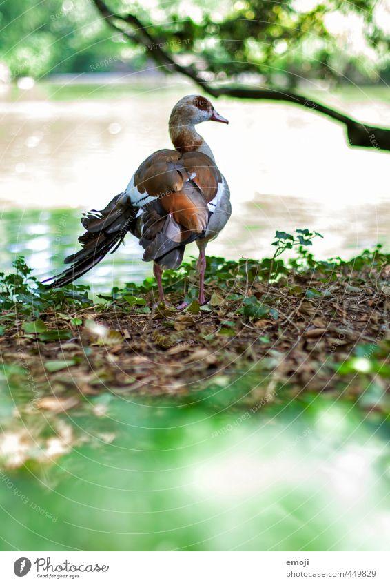UTO Natur grün Tier Umwelt natürlich Vogel Wildtier Gans