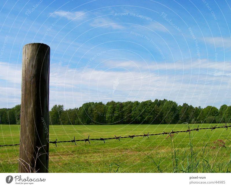 Über den Zaun geschaut Himmel weiß Baum grün blau Wolken Wald Wiese Gras Frühling Weide Halm Säule Pfosten Stacheldraht