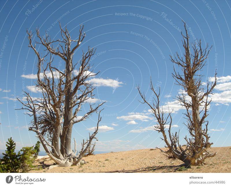 Bristlecone Pinien Himmel Baum Wolken dünn Ast Nationalpark