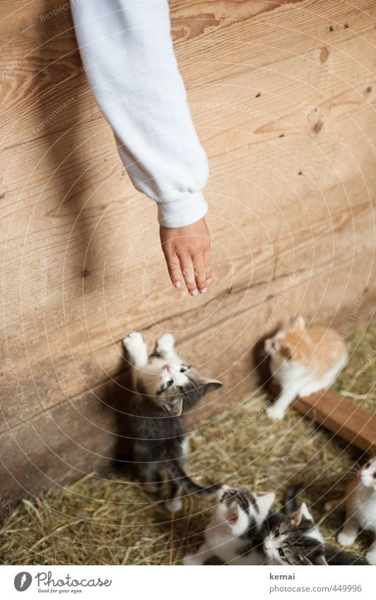 Kleine Freunde Katze Mensch Hand Tier Tierjunges Spielen Junge Holz klein Freundschaft Arme Finger niedlich Tiergruppe Neugier Fell