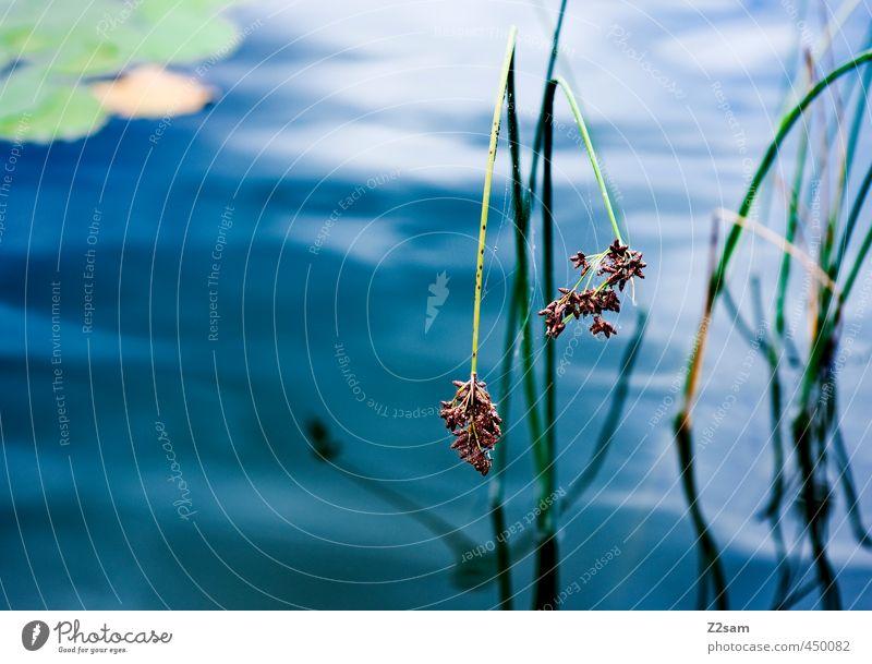 ruhe Natur blau grün Wasser Pflanze ruhig dunkel Umwelt kalt Gras See natürlich elegant Idylle Wachstum Sträucher