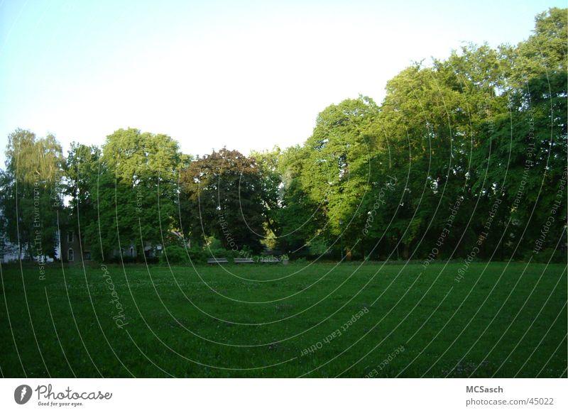 Chemnitz - Siegmar Park Baum Sonne grün Wald Wiese
