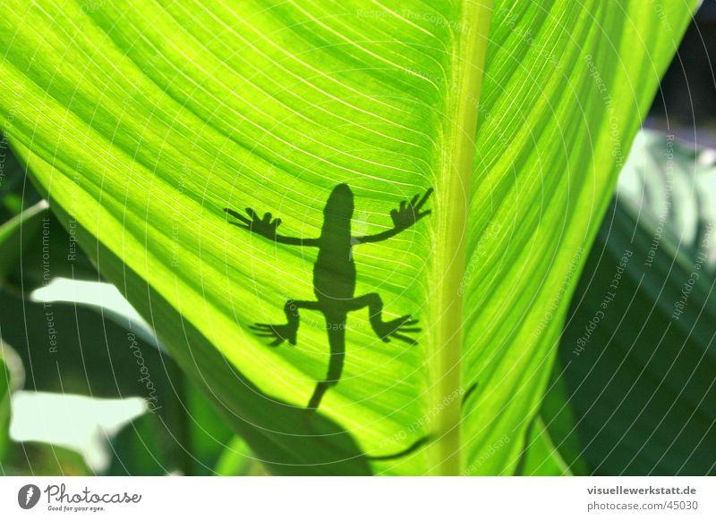 plastik trifft natur Sonne grün Sommer Blatt Wärme Dekoration & Verzierung Physik heiß Natur Lichtspiel Reptil Leguane Gecko
