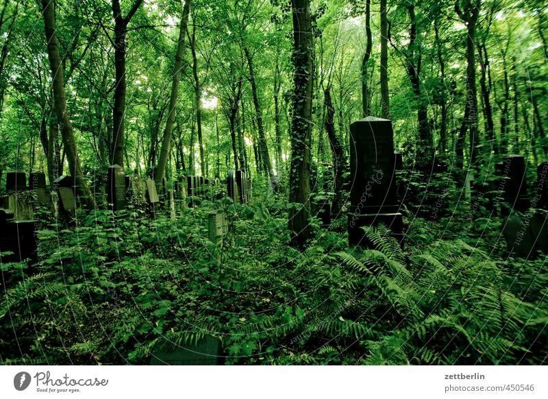 Friedhof Natur grün Pflanze Sommer Baum Erholung Einsamkeit Landschaft Blatt Wald Umwelt Gefühle Traurigkeit Tod Gras Garten