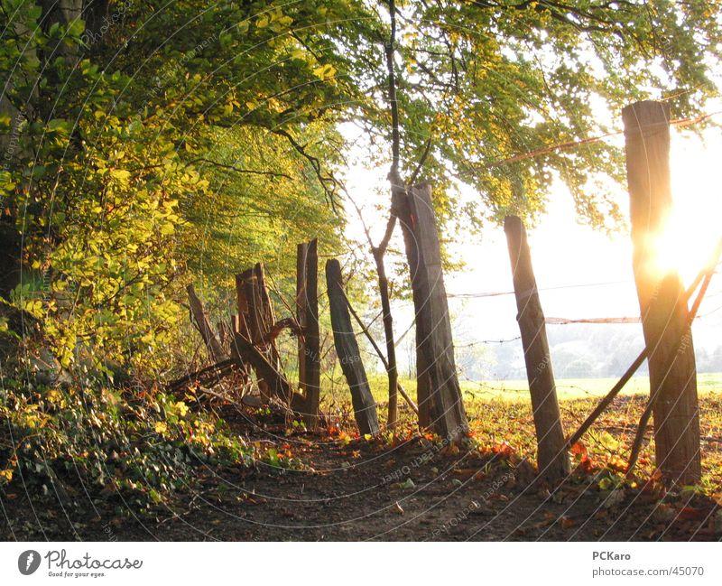 die letzten warmen Sonnenstrahlen Zaun Wald Baum Blatt Herbst Spaziergang
