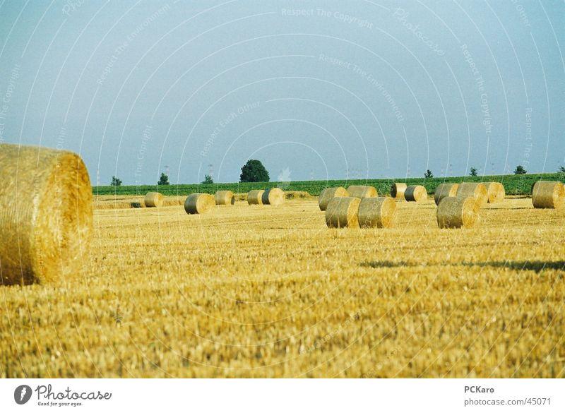 auf´m Land Himmel Gras Feld Europa Amerika Strohballen