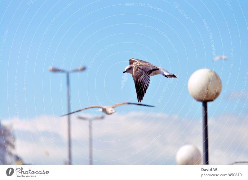 flying Sommer Himmel Hafenstadt Wildtier Vogel Flügel Möwe 1 Tier 2 fliegen Blick blau Umwelt achtsam Farbfoto mehrfarbig Außenaufnahme Textfreiraum oben Tag