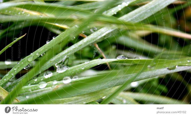 Gras mit Tau Wasser Gras nass nah Urwald feucht Tau