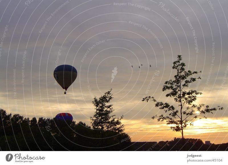 Luftballon Nacht Baum Wolken Niederlande Luftverkehr Ballone