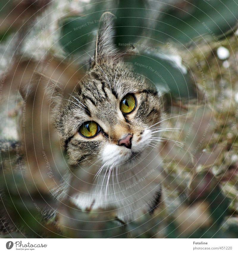 Ich bin Monti Katze Natur Pflanze Sommer Tier Blatt Umwelt natürlich Garten Sträucher ästhetisch weich Neugier Fell Ohr Tiergesicht