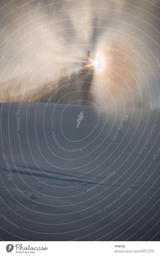 Erscheinung Himmel Natur Ferien & Urlaub & Reisen Sonne Baum Landschaft Winter Wald kalt Umwelt Schnee träumen Eis Luft leuchten Nebel