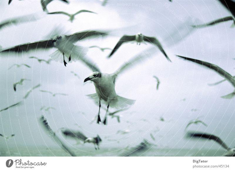 die Vögel Himmel Meer Wolken kalt Bewegung Vogel Angst nass Möwe Monochrom