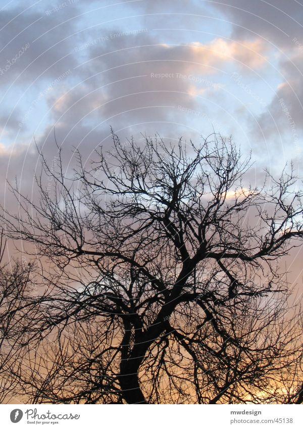 sonnenuntergang Baum Wolken Sonne Beleuchtung silhuette Sonnenuntergang