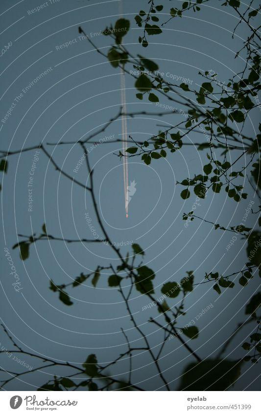 Blatt(trieb)werk Himmel Natur Ferien & Urlaub & Reisen blau Pflanze Baum schwarz Ferne Umwelt Freiheit grau Luft Wetter Verkehr Geschwindigkeit