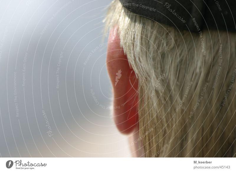Ohr Mensch Ohr