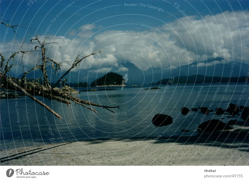 Vancouver Island Wasser Baum Meer Strand ruhig Wolken Ferne Erholung Berge u. Gebirge Sand Landschaft Ausflug Insel Ast Kanada Wolkenhimmel