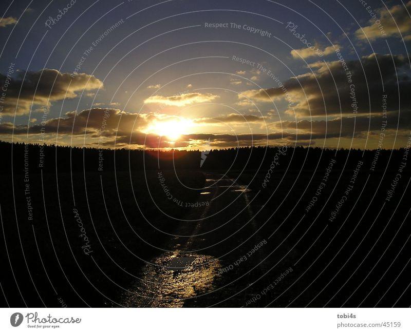 Allabendlicher Weltuntergang Sonne Wolken Abendsonne Waldrand