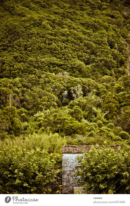 versteckt Blume Sträucher Wald Haus Einfamilienhaus Bauwerk Gebäude Architektur Fassade Dach grün Hütte Versteck verstecken verdeckt Berghang Berge u. Gebirge