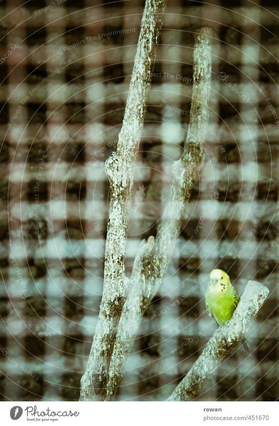wellensittich Haustier Vogel Zoo 1 Tier grün Gitter Käfig gefangen sitzen Ast fliegen Raster einzeln Einsamkeit Wellensittich parallel Justizvollzugsanstalt