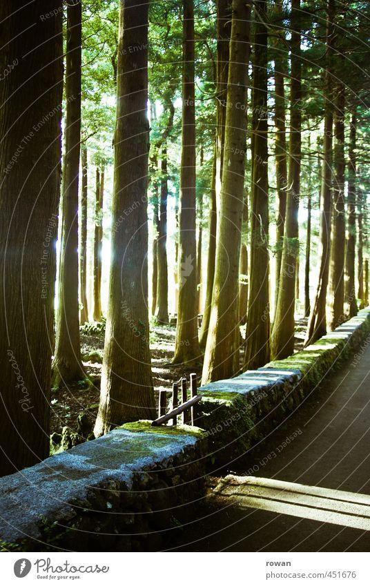 märchenwald Baum Wald Mauer Wand Straße Wege & Pfade außergewöhnlich dunkel Wärme vertikal Tor Gartentor Schatten fantastisch Märchen Märchenwald Lichteinfall