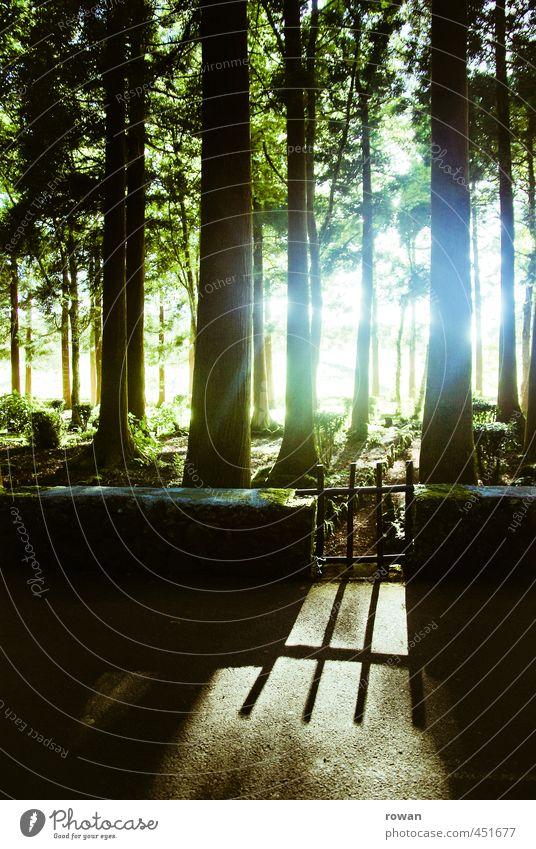 gartentor Baum Garten Park Wald Gartentor Mauer Eingang mystisch geheimnisvoll Märchenwald fantastisch Farbfoto Außenaufnahme Menschenleer Textfreiraum unten