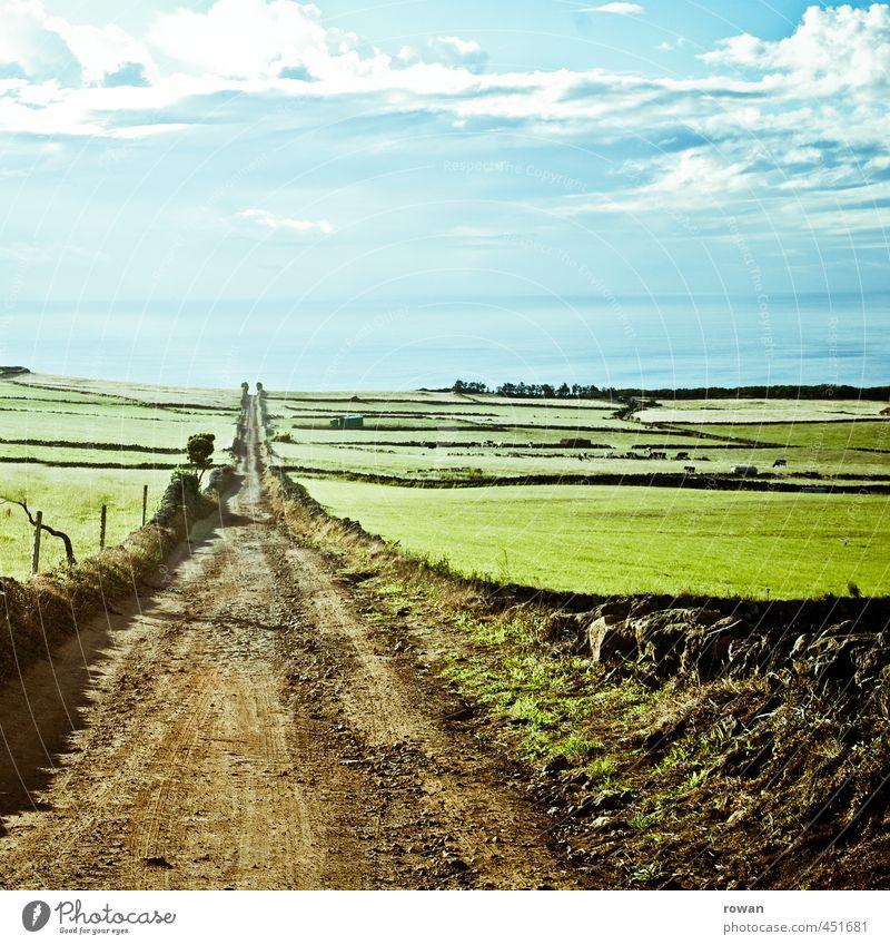 zum meer Umwelt Natur Landschaft Sommer Gras Wiese Feld Meer grün Fußweg gerade geradeaus Freiheit Landwirtschaft Zentralperspektive Fluchtpunkt Horizont Ziel