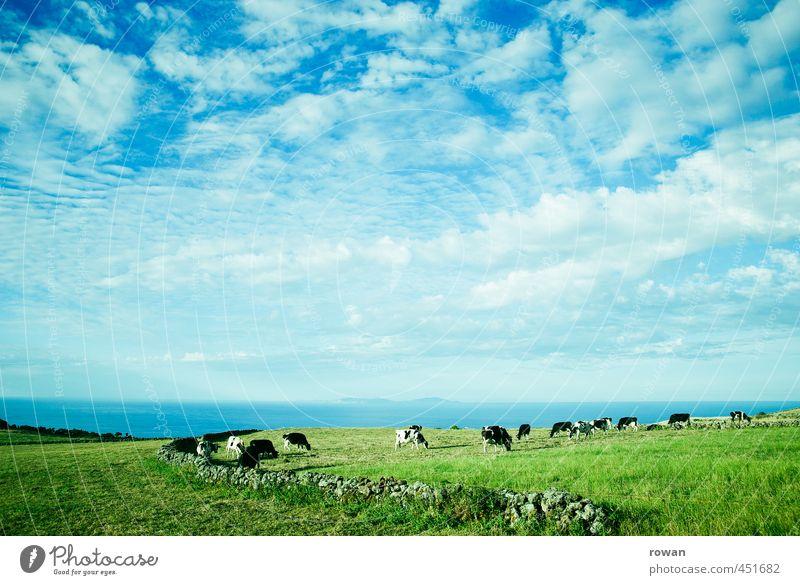 landschaft Himmel Natur Pflanze Meer Landschaft Wolken Tier Umwelt Wiese natürlich Gras Wetter Feld Luft frisch Schönes Wetter