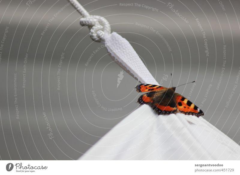 I´ ve been everywhere.... Tier Wildtier Schmetterling 1 Knoten fliegen leuchten träumen warten ästhetisch frei schön grau orange schwarz ruhig Reinheit