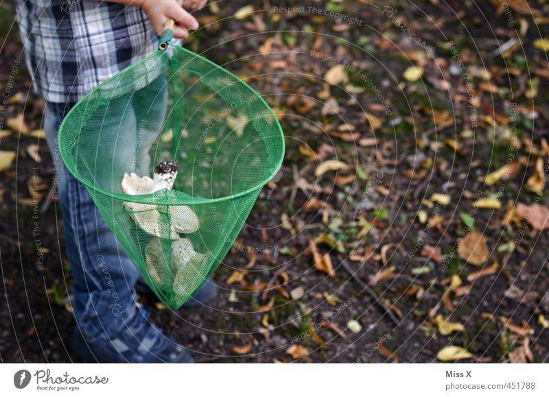 Pilzsammler Lebensmittel Ernährung Mensch Kind Junge 1 3-8 Jahre Kindheit 8-13 Jahre Herbst Wald lecker Sammlung Netz Pilzsucher Suche finden herbstlich
