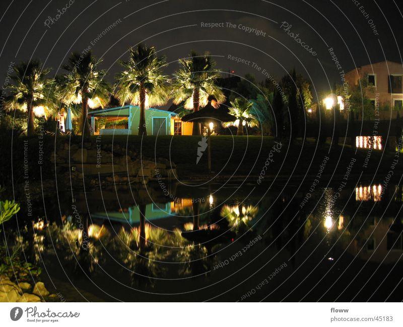 Beleuchtete Palmen Haus dunkel Architektur Spiegelbild