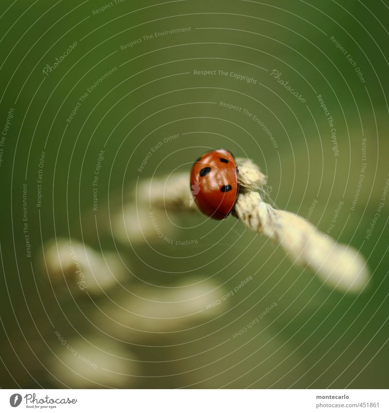 Tanz | mit dem Wind Umwelt Natur Pflanze Herbst Gras Grünpflanze Wildpflanze Tier Wildtier Käfer Marienkäfer 1 beobachten entdecken Fressen authentisch einfach