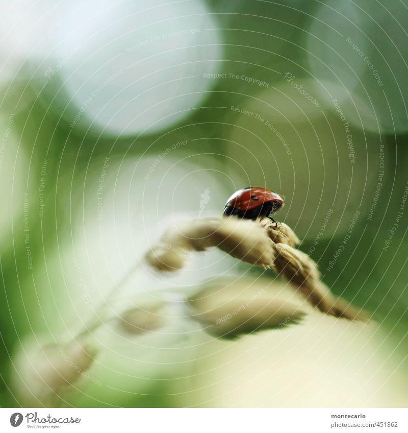 Karlheinz... Umwelt Natur Pflanze Sonnenlicht Sträucher Grünpflanze Wildpflanze Tier Wildtier Käfer 1 entdecken krabbeln authentisch klein natürlich niedlich