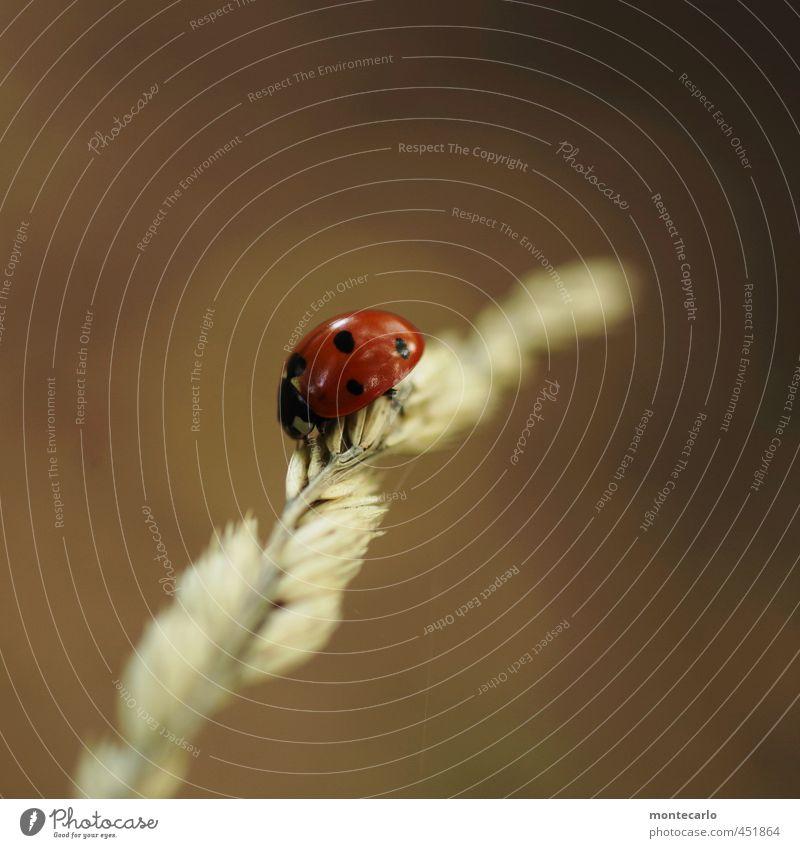 Untermieter | der bleiben darf... Umwelt Natur Pflanze Sommer Sträucher Wildpflanze Tier Wildtier Käfer Marienkäfer 1 dünn authentisch einfach Freundlichkeit