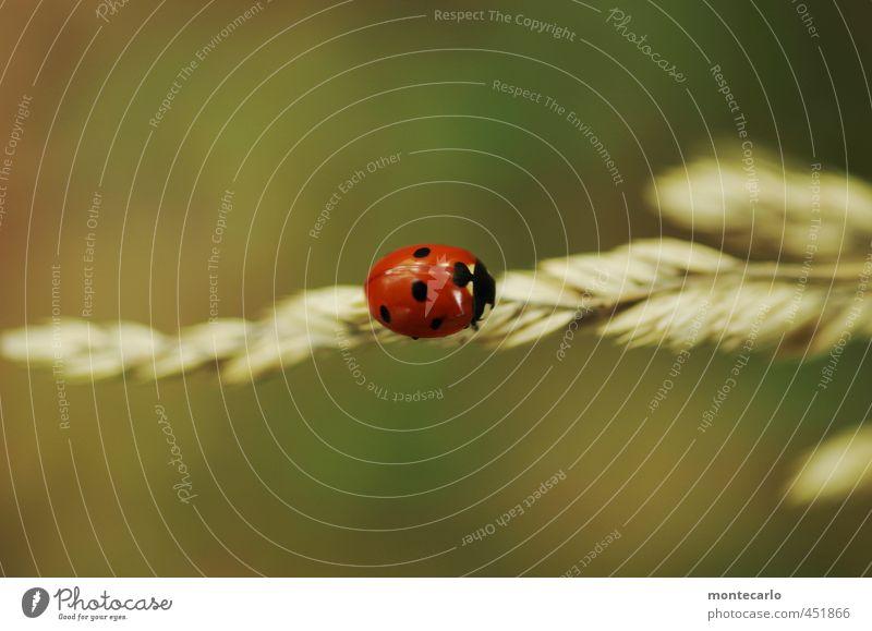 hold the line Natur grün Pflanze rot Tier Umwelt Herbst Gras klein natürlich Wildtier authentisch Sträucher niedlich einfach nah