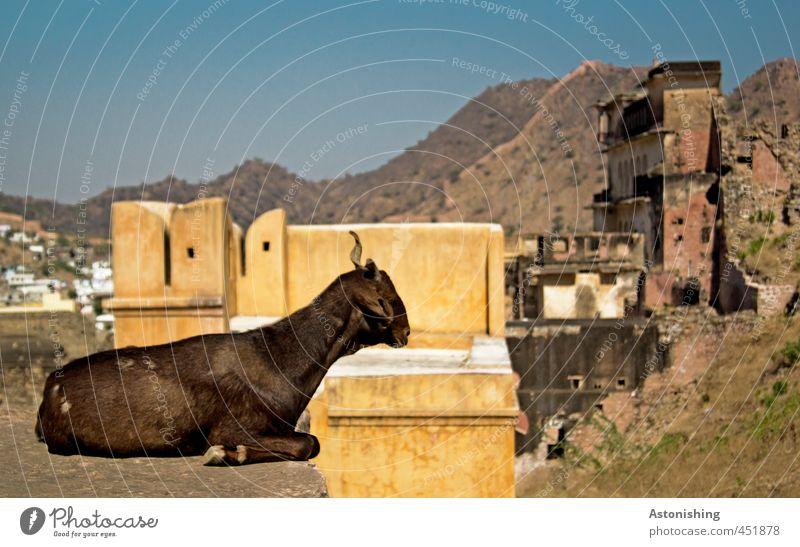 Ziege Himmel Natur Stadt Tier Haus gelb Berge u. Gebirge Wand Mauer Architektur Gebäude Wetter Fassade sitzen Hochhaus Schönes Wetter