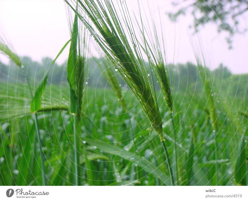 Feld Frühling Natur Pflanze