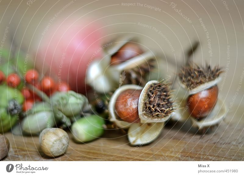 Herbstleben Lebensmittel Frucht Apfel Ernährung Bioprodukte Natur Blatt mehrfarbig herbstlich Herbstlaub Herbstfrucht Eicheln Kastanie Baumfrucht Vogelbeeren