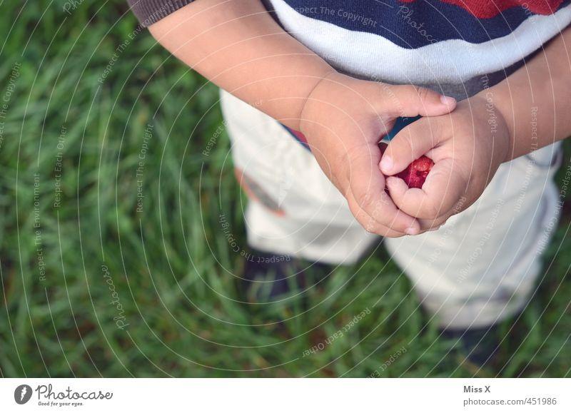 Himbeere Mensch Kind Sommer Hand rot Wiese Gesunde Ernährung Essen Gesundheit Lebensmittel Frucht Kindheit frisch Finger süß