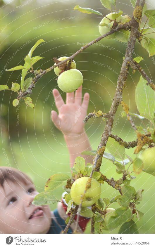 Hab dich gleich Lebensmittel Frucht Apfel Ernährung Bioprodukte Mensch Kind Gesicht Arme 1 1-3 Jahre Kleinkind Sommer Herbst Baum Garten fangen frisch lecker